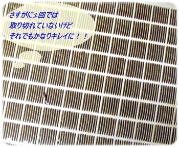 shark2 090-1.JPG
